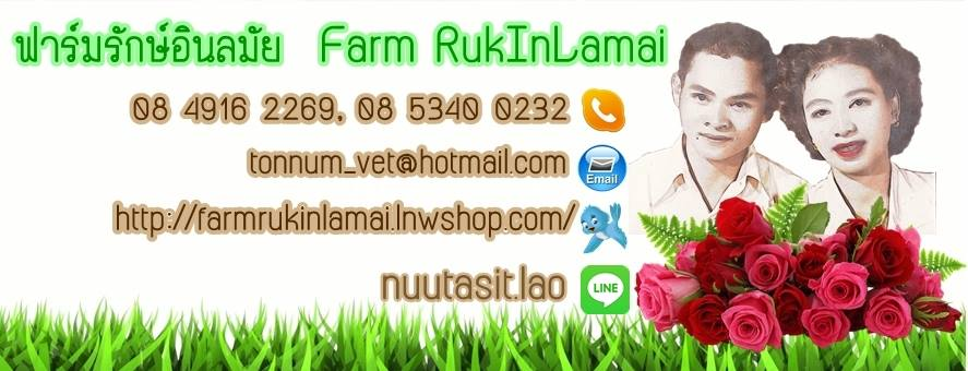 เกษตรอินทรีย์ organic farm