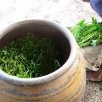 ปลูกผักบุ้งในโอ่ง ดีอย่างไร