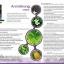 Arshithong เครื่องดื่มสมุนไพร อาชิตอง สารสกัดจากสมุนไพรธรรมชาติหลากชนิด ด้วยสรรพคุณรอบด้านที่รวมไว้ในขวดเดียว thumbnail 2