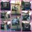 Coopster แทรมโพลีน 8ฟุต(2.44ม) สีน้ำเงิน thumbnail 11